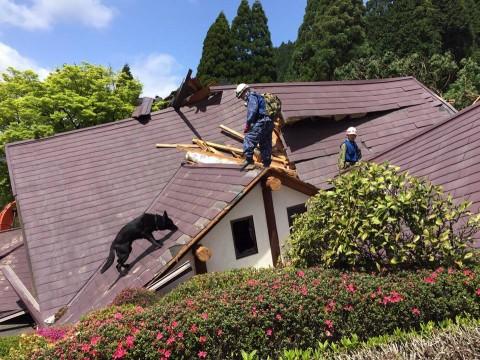 熊本県で発生した地震への災害派遣(警備犬)4