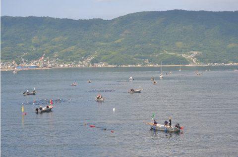 海上自衛隊 幹部候補生 約300名が江田島湾を力泳【遠泳訓練】No3